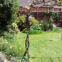 Our small back garden